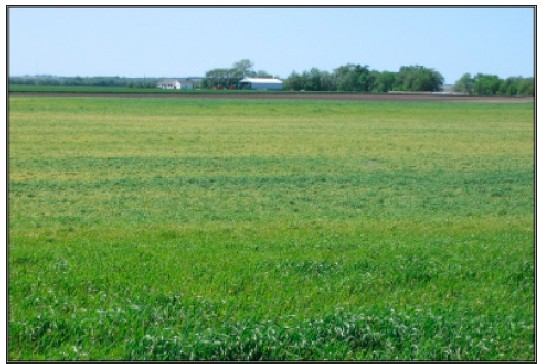 Freeze damage is most pronounced in the low areas of the field, near the center of the photo
