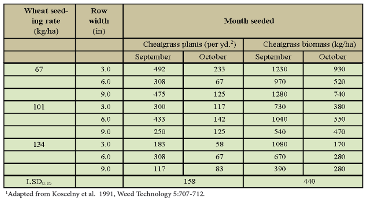 effect of wheat seeding rate